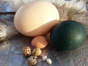 rävlanda ägg